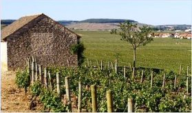 Les Greves vineyard, source of le vignes de l'enfant Jesu/Photo from burgundy-report.com