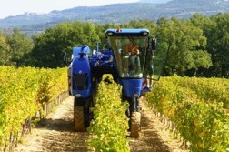 Grape Harvester in Use