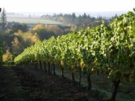 Stangeland Vineyards