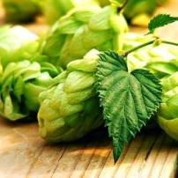 Fresh Lemondrop Hops