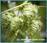 El Dorados on The Vine