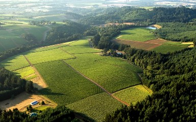Knudsen Vineyard