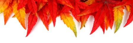 autumn-leaf-frame-11286977540bm6b