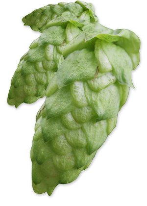 hop-huellmelon-feature