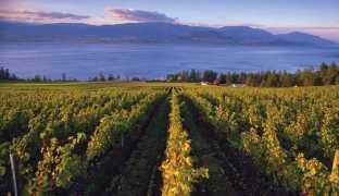 bc-wine-country_aa6a06cc-292f-4dcf-9e7e-da75ce4dccbd